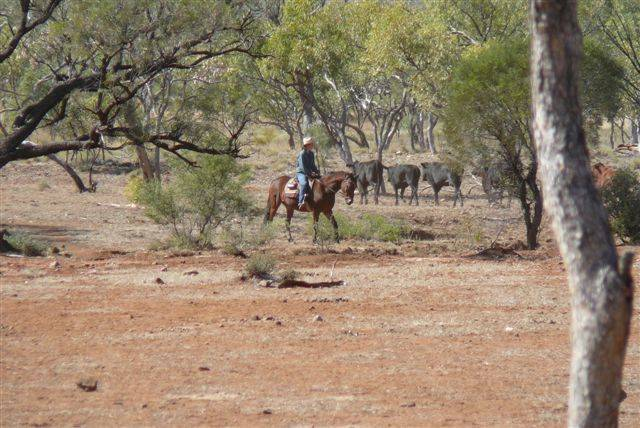 TOO RISKY: Graziers stay well clear of the Mary Kathleen mine site when mustering cattle on their 700 square mile property.